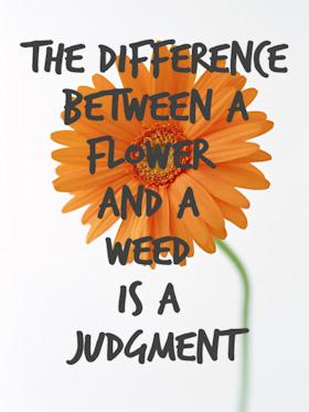 Flower-Judgment.280