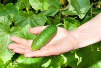 organic-gardening2