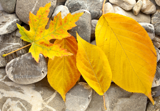 Leaves on stones