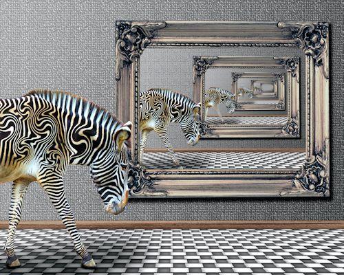 Zebra 24666 500