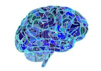 brain-951874 250
