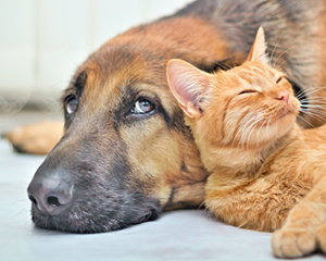 Ear Mite Home Remedies For Your Dog Or Cat Blissplan Com