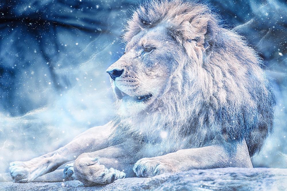 Mystical Animal Wallpaper
