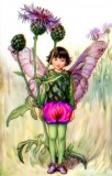 The Greater Knapweed Fairy: Flower Fairies Cross Stitch Pattern