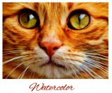 "Custom ""Cat"" Cross Stitch Pattern - Download"
