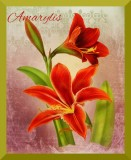 "2 Gorgeous Amarylis Flowers on a Vintage Background, 8"" x 10"" Glossy Print"