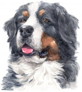 183 Watercolor Dogs Cross Stitch Patterns: On A DVD
