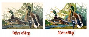 141 Audubon Cross Stitch Patterns: Instant Download
